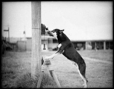 police-dog-1935